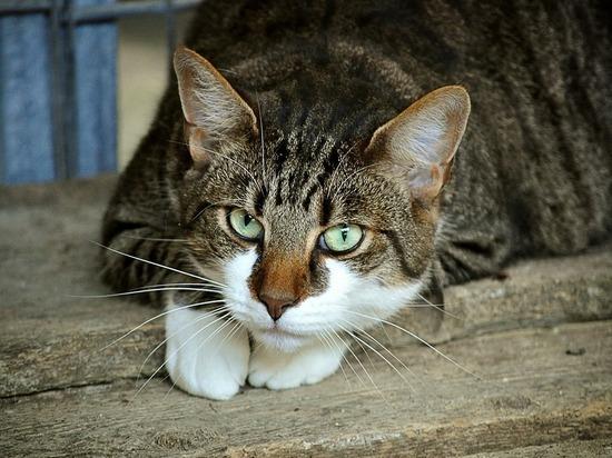 Крымчанка задавила кота уличного музыканта и написала на него заявление
