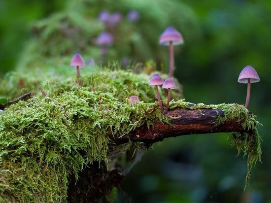 Ученые: грибы помогают улучшить память и внимательность