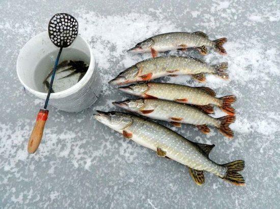 В Брянской области запретили ловить рыбу