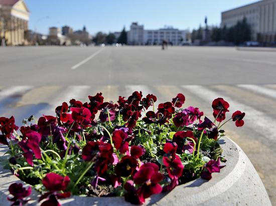 Ставрополь с наступлением тепла украсят миллион цветов