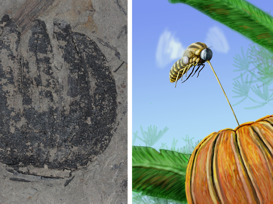 Доисторические насекомые занимались опылением за 45 млн лет до появления цветов