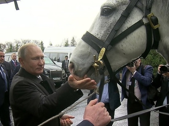 Путин в Киргизии сыграл волшебника, заполучив щенка и коня