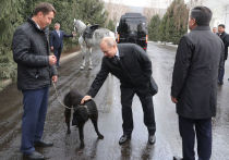 Кинолог дал совет Путину, как вести себя с подаренным щенком