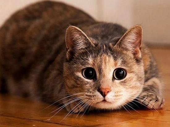 Житель Николаевска-на-Амуре получил срок за убийство кота