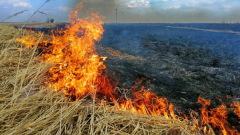 С начала сезона в Смоленской области сгорело 300 га сухой травы