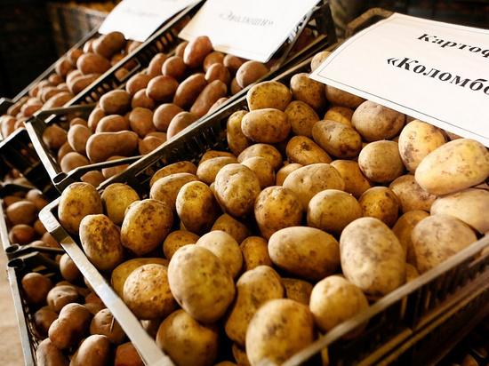 В кубанских предгорьях вырастили сельхозпродукцию на 53 миллиарда