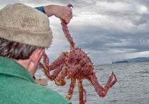Федеральное агентство по рыболовству разработало поправки в законодательство, которые, как оно уверяет, ставят цель навести порядок в сфере вылова крабов