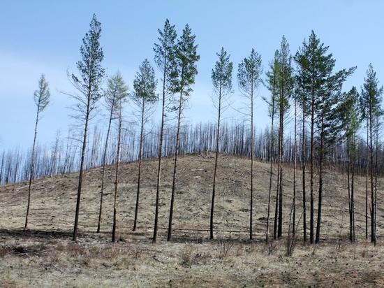 Валентик: Ситуация с лесами в Забайкалье говорит о дефектности системы