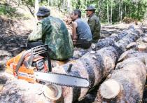 Министр природы Бурятии пообещал навести порядок в лесу за 2-3 года