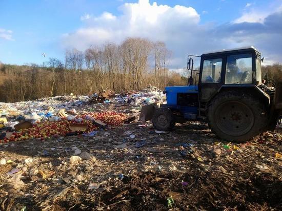 Полторы тонны яблок уничтожили в Себеже