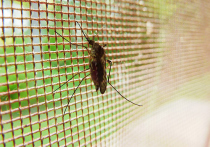 Первое собственное лекарство от тропической малярии, которая является смертельно опасной болезнью, скоро появится в России