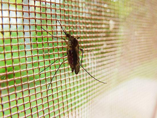 Ученые создали первое российское средство от малярии