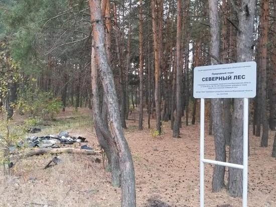 Воронежцев пригласили на уборку в «Северный лес»