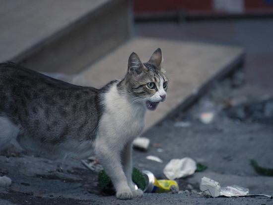 Лабытнанги лидирует по числу пострадавших от укусов животных в ЯНАО