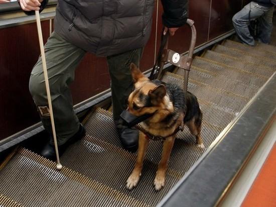 Пострадавший мужчина первым делом отвез пса к ветеринару
