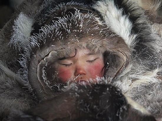 Картинки по запросу арктический сон у детей