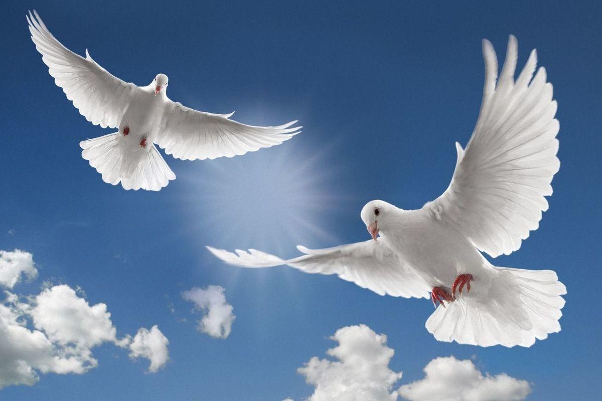 Открытки голубь в небе, года картинки для