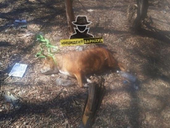 Мертвую собаку с веревкой на шее нашли в барнаульском парке