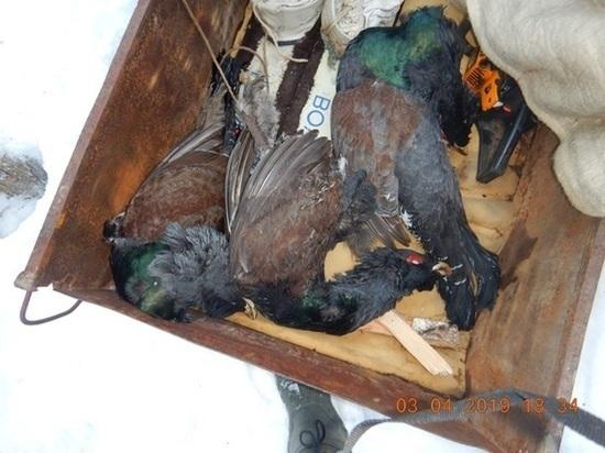 Природнадзор Югры поймал браконьеров с помощью беспилотника