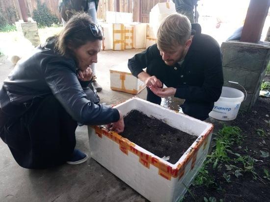Краснодарцы вырастят у себя дома платаны, которые потом высадят в городе