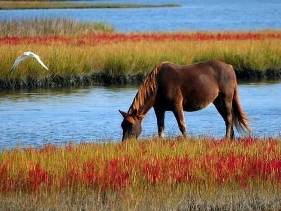 В РТ заводчикам татарской породы лошадей субсидируют 60% расходов