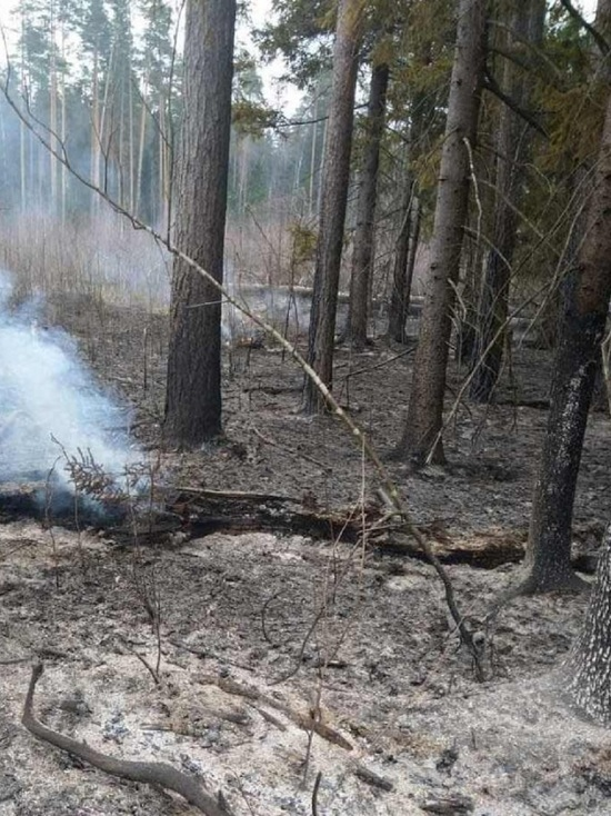 Лесной пожар чуть не охватил поселок под Хвастовичами