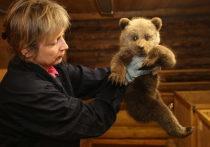 Три медведицы нашли спасение за тысячу километров - в Тверской области