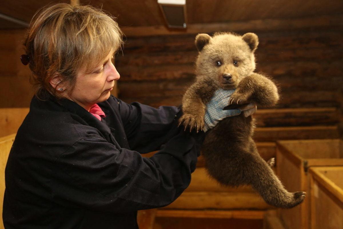熊幼崽从康复中心得到了一个朋友