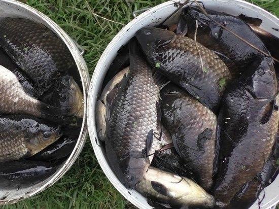 В Туле на время нереста запретят ловить рыбу