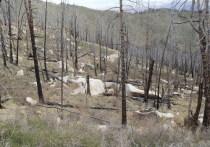 Из-за потепление резко возрастет число лесных пожаров, которые могут привести к усилению парникового эффекта