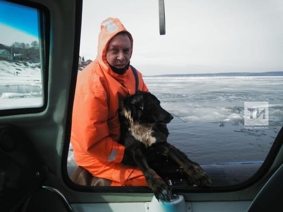 В Татарстане спасатели вытащили из промоины на Волге тонущего пса
