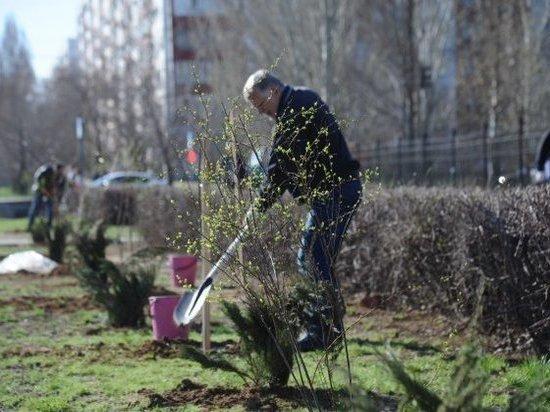Врачи детской поликлиники высадили липовую аллею к юбилею Волжского