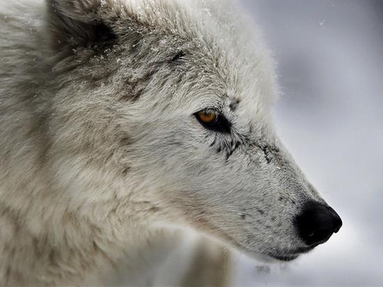 В Надыме искусанные дикими собаками дети получили компенсации