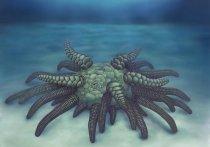 Ученые из Великобритании обнаружили окаменелые останки нового обитателя подводного мира, который жил на Земле 430 миллионов лет назад