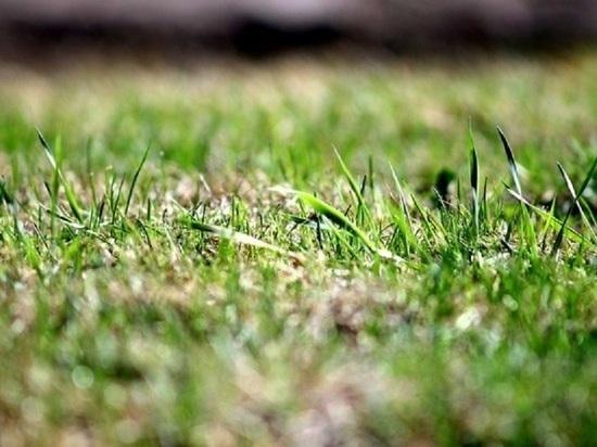Красноярцам обещают теплые выходные с дождем