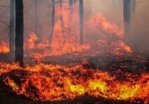 Часть возгораний началась по вине человека