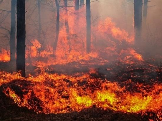 Под Красноярском начались первые в этом году лесные пожары