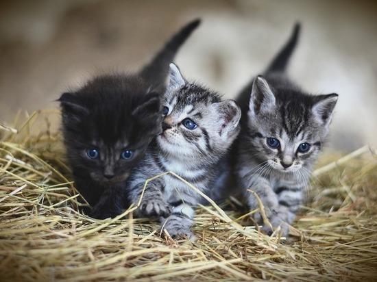 Признаки привязанности: как понять, что кошка любит хозяина