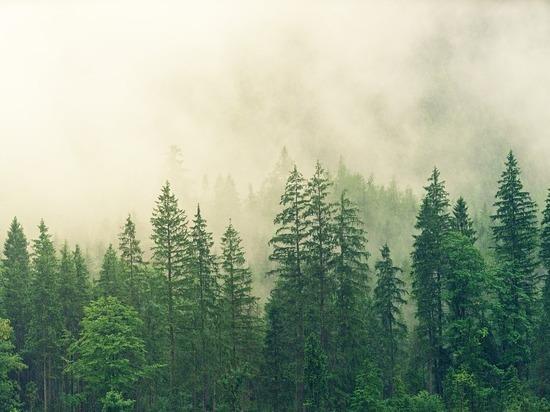 Запасов леса в Сибири осталось на 15 лет, заявили ученые