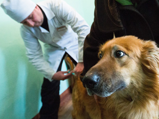 Как правильно делать прививки собаке