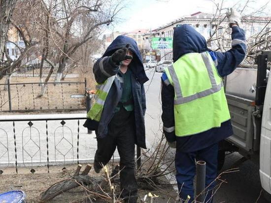 Общественница раскрыла мотивацию спила деревьев в Чите