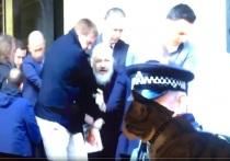 В Твиттере Wikileaks появились трогательные кадры, на которых запечатлено как кот Джулиана Ассанжа смотрит по телевизору кадры с арестом хозяина