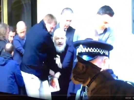 Появилось видео, как кот Ассанжа следит по ТВ за арестом хозяина