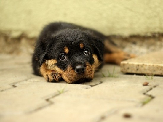 В Волгограде волонтеры ищут дом для 10 щенков