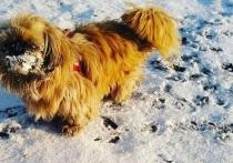 Горожане пишут в соцсетях, что в Красноярск снова пришла зима и делятся снимками снега