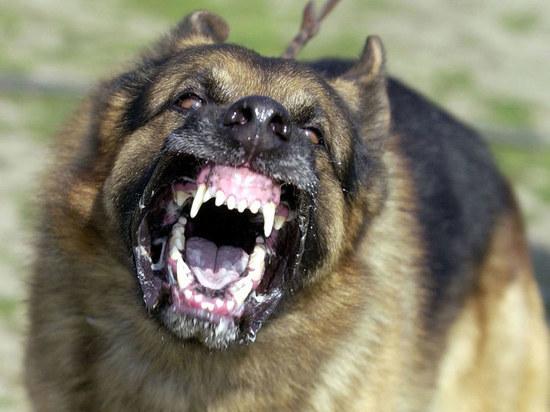 В Улан-Удэ 5 агрессивных псов, живущих в квартире, держат в страхе весь дом