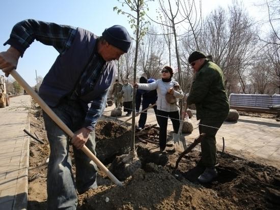 В Волгограде сажают 5 тысяч деревьев и кустарников из Горпитомника