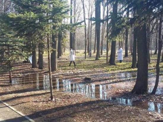 Парки Ульяновска обработают от клещей