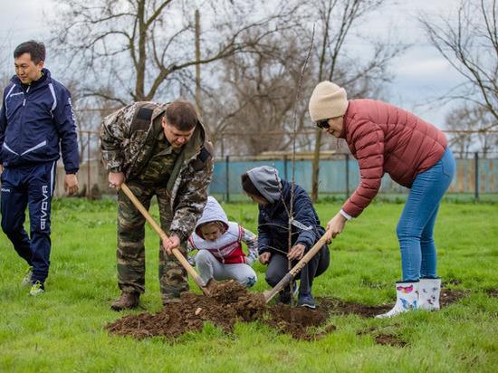 Прокуроры посадили деревья в калмыцком детском интернате