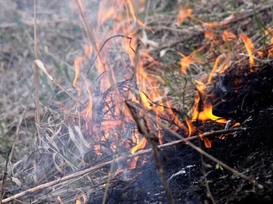 Дело возбуждено по факту уничтожения чабанских стоянок в Забайкалье